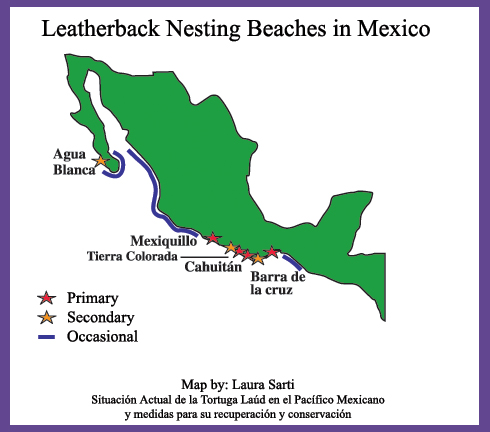 leatherback.nesting.beaches.mexico.jpg